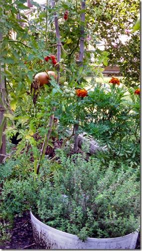 Garden 08 (4)