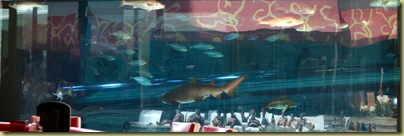 GN Shark Tank with chute