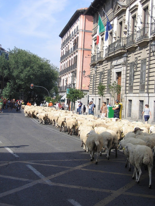 sheep-protest-3