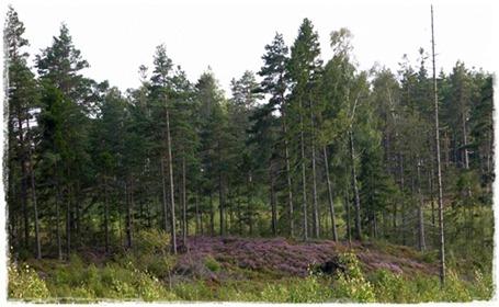 8 skog