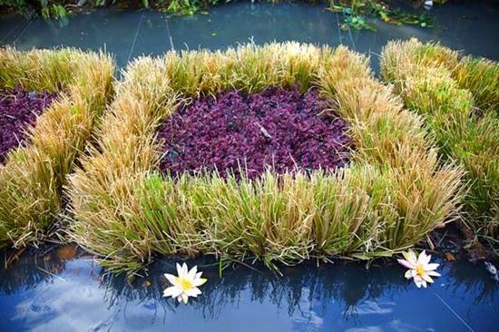 Plantas Rio Pasig 06