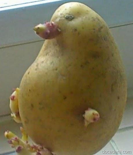 legumes e formas9