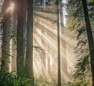 a-walk-in-the-woods.jpg