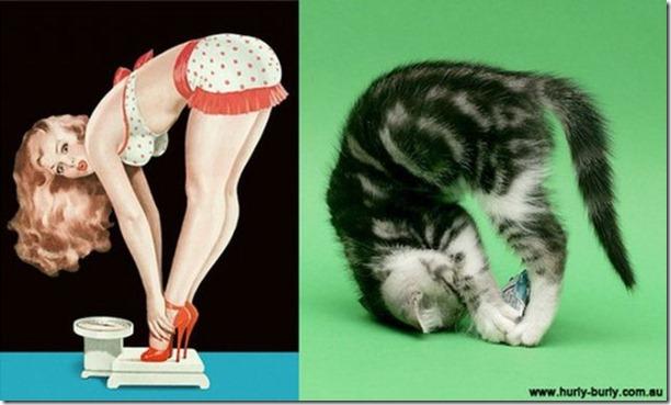 cats-pinup-models-5