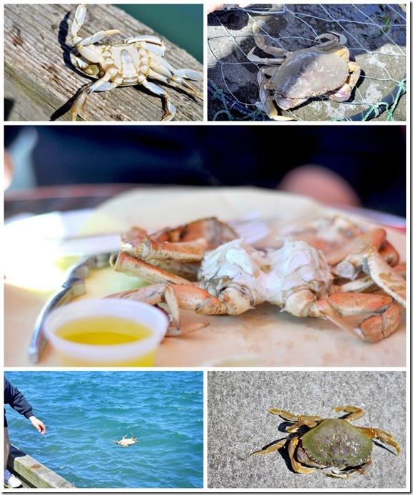 coos bay crabbing2