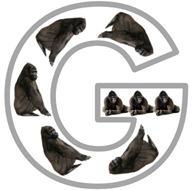 g gorilla
