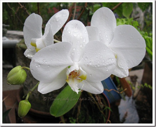 02-14-nanci-orchids