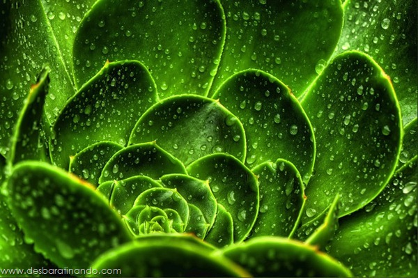 natureze-nature-padrao-pattern-desbaratinando (6)