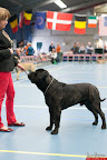 20130510-Bullmastiff-Worldcup-0610.jpg