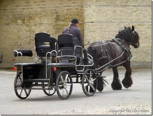 Hestekøretøj