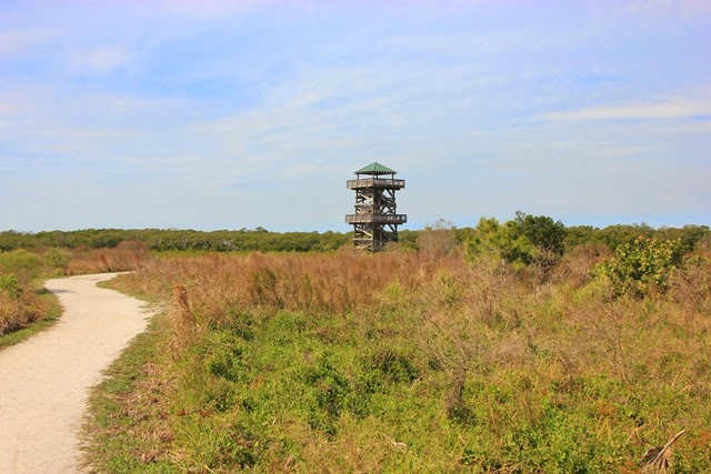 Robinson Preserve Observation Tower