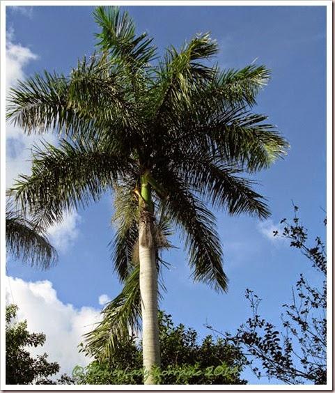 08-01-palm