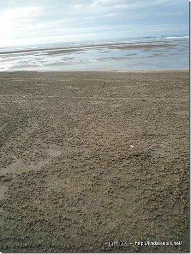 沙崙海水浴場-噁心的粒粒