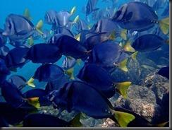 Underwater fish 2