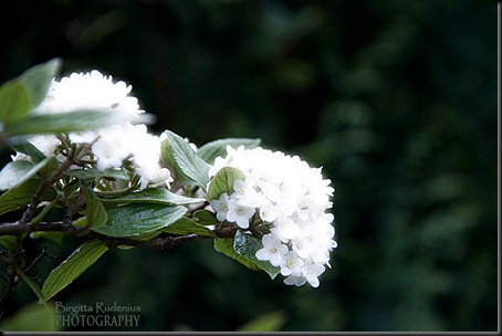 blom_20120516_olvon