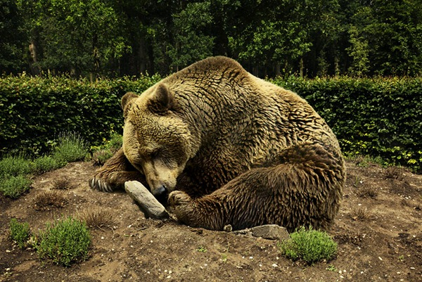 Sleeping_Bear800