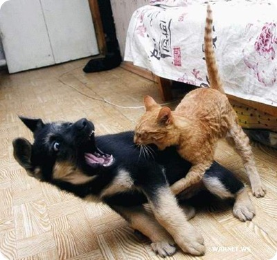 cat vs dog 014
