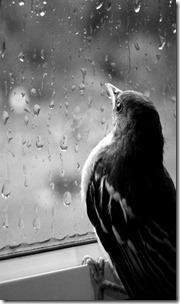 Bird watching the rain