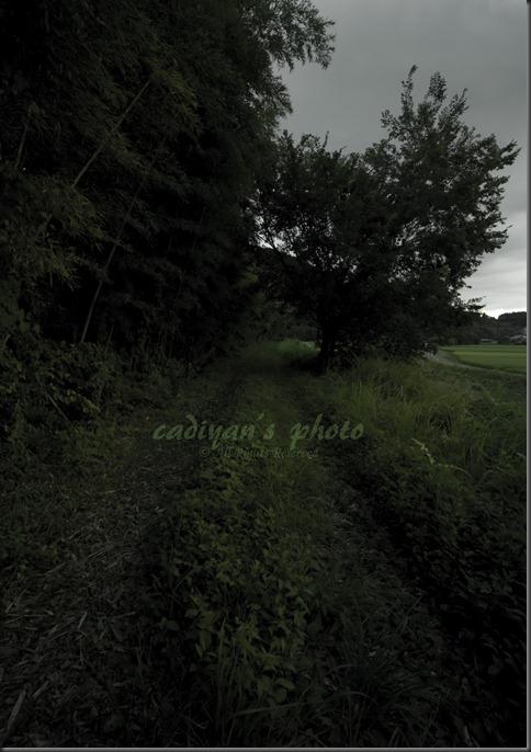 D700_2012-08-09_004