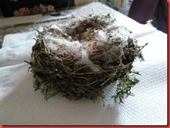 bird nest 1