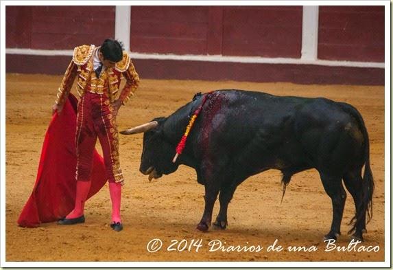 Toros 2014 (1)-51