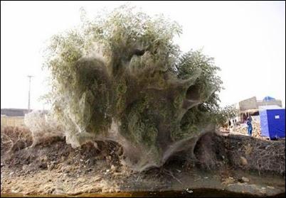 spider web4