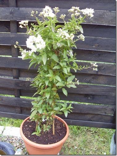 2011_07 Blumen im Garten (12) (600x800)