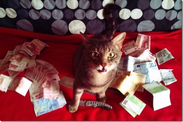 rich-wealthy-cats-12