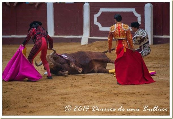 Toros 2014 (2)-34