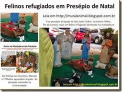 Felinos refugiados em Presépio de Natal_thumb[1]