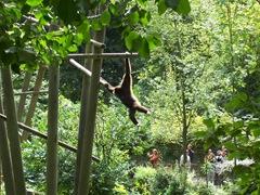 2011.08.07-020 gibbons