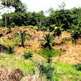 写真5: 自然林・アブラヤシ混交地域の景観 / Photo 5: