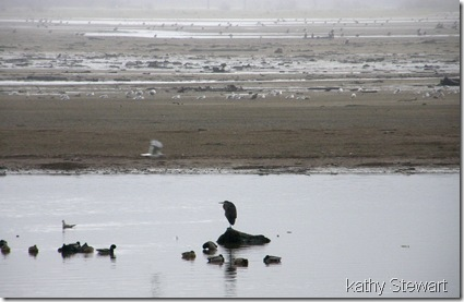 Heron, Mallard and activity on the flats
