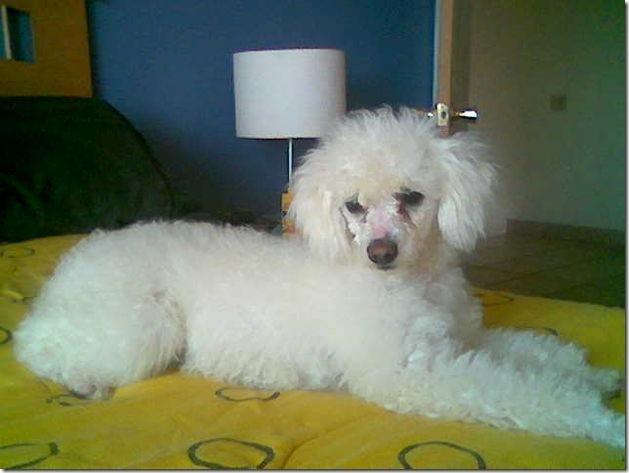 fotos de perritos imagenesifotos.blogspot (15)