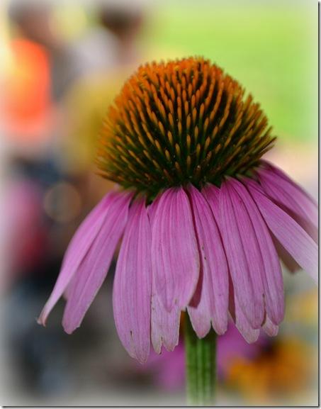 edited flower