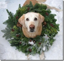 dog and wreath