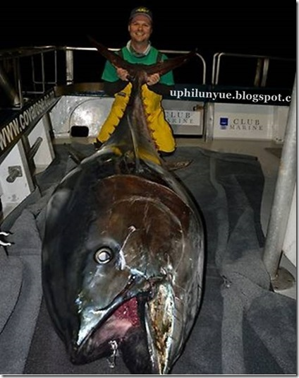 Bluefin 600 pound plus Landed in New Zealand