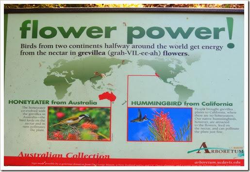 131124_UCD_Arboretum_AustralianCollection_65