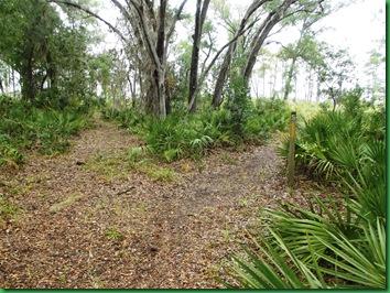Pat's Island Trail 029