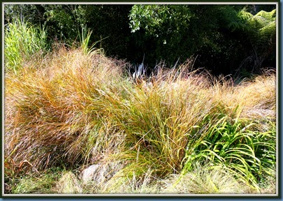 Gossamer Grass with long fronds