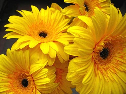 flowers_0aisa754