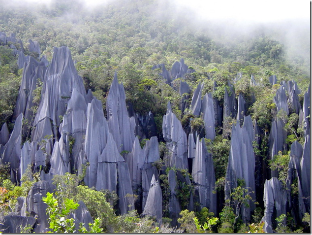 Rock Pinnacles of Gunung Mulu National Park