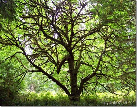 Beautiful Tree draped in moss