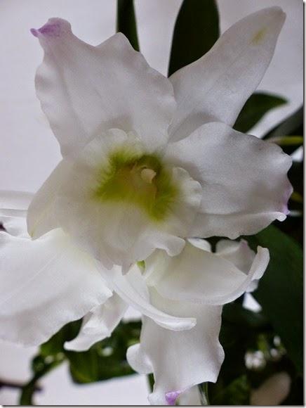 2015_04 Orchideen (11)