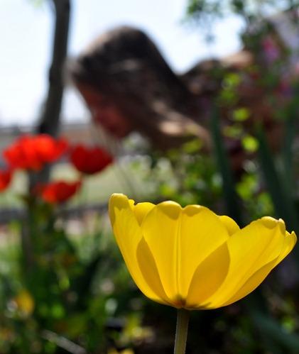 2012-04-08 julia flowers