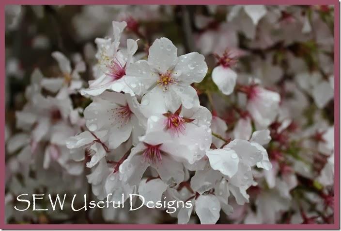 Spring garden blossom 1