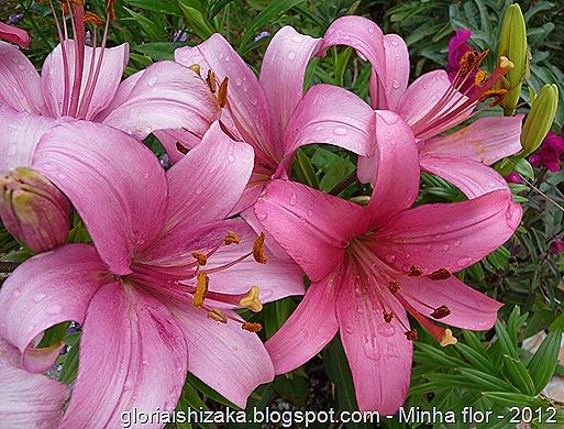 Gloria Ishizaka - minha flor 4