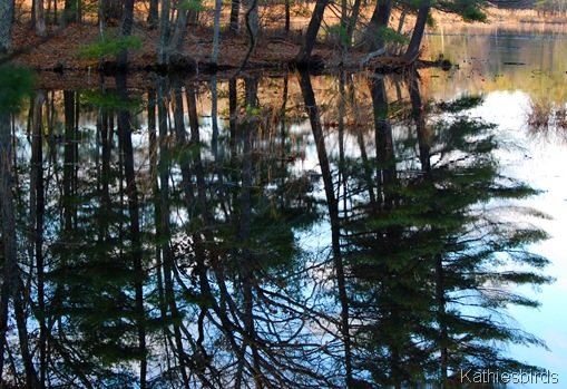 2. forest reflection-kab