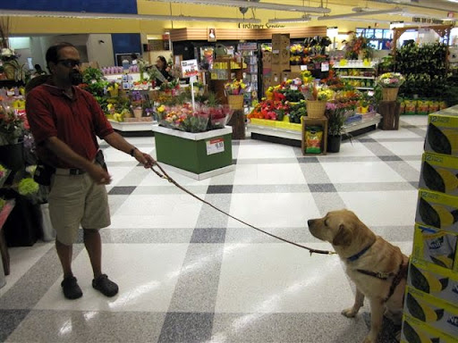 Tilden doing obedience inside a store