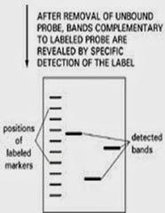 Autoradiography